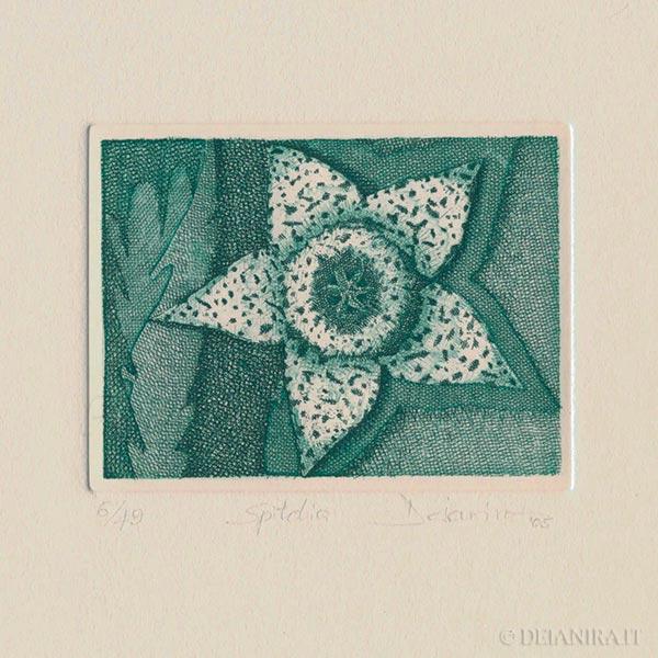 Deianira, calcografia-Spitelia
