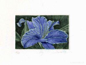 Acquaforte, Acquatinta, Engraving, Etching, Aquatint, Chalcography, Watercolor