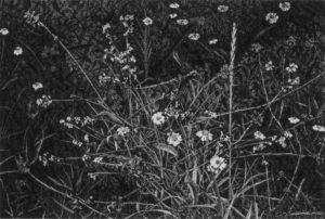 Deianira; Fiori di campo ad inchiostro di china