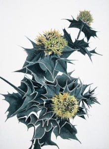 Deianira; Opera ad inchiostro di china ed ecoline
